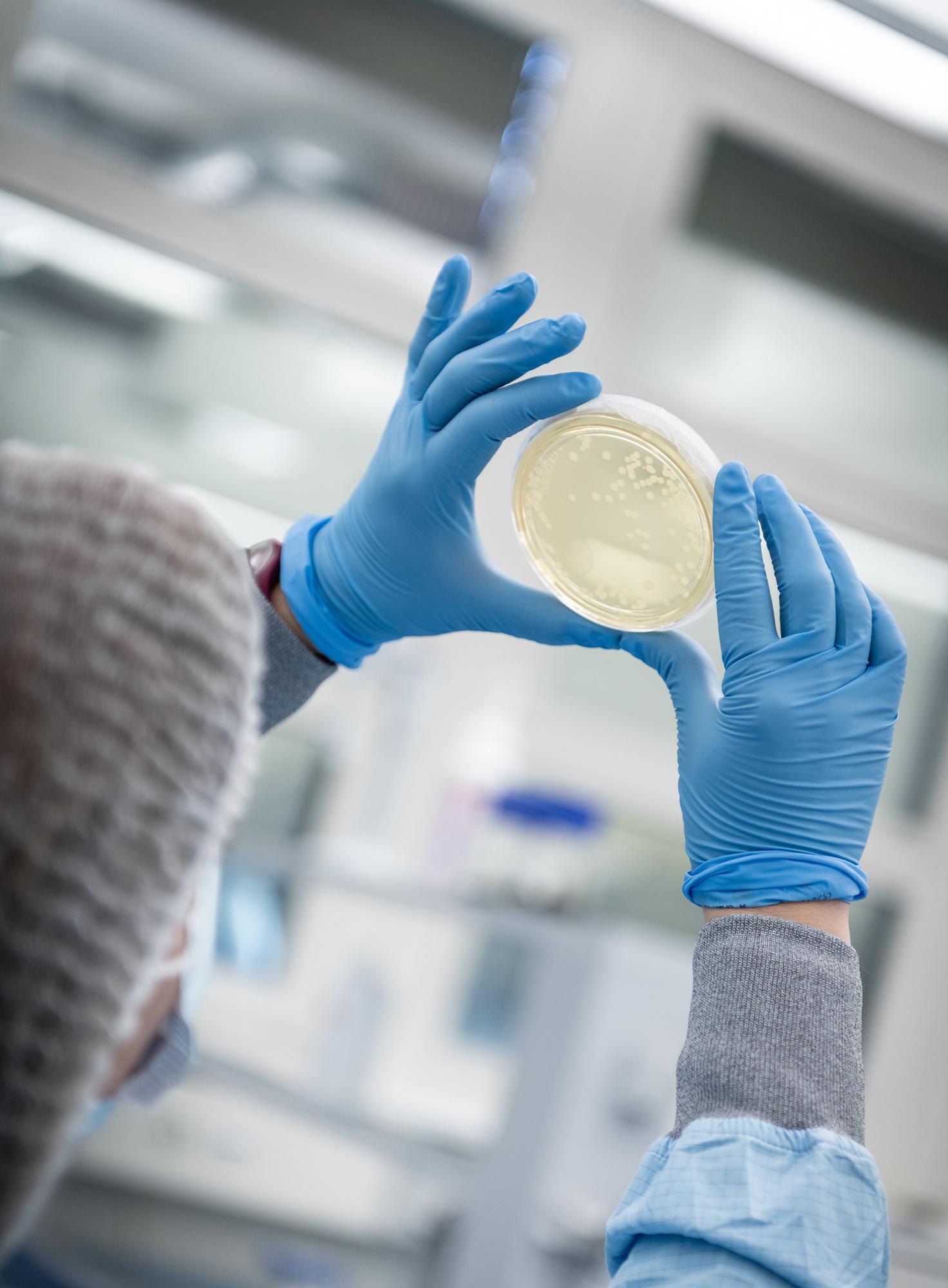 Laborantin prüft den Inhalt einer Petrischale